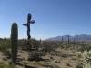 saguaro_natl_park_05
