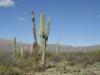 saguaro_natl_park_08