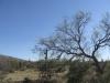 saguaro_natl_park_10