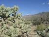 saguaro_natl_park_13