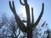 saguaro_natl_park_14
