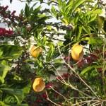 empty oranges