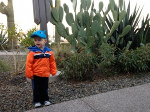 Max and an Elephant-ear Cactus