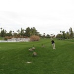 sue and the geese at rancho mirage