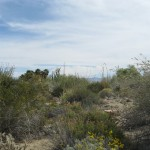 living-desert-05