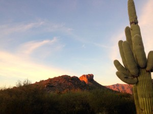 Sunset on Dinosaur and a cactus