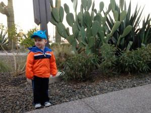 Max and an Elephant-ear Cactus