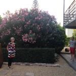 Paul & Shirley's yard